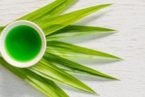 Uống nước lá dứa có bị mờ mắt không Binhnuocteen